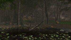 Trumpet mushrooms brackish pond