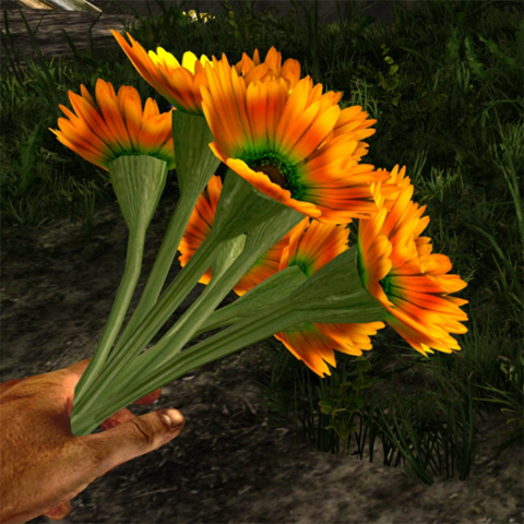File:Orange prairie flower in hand.png