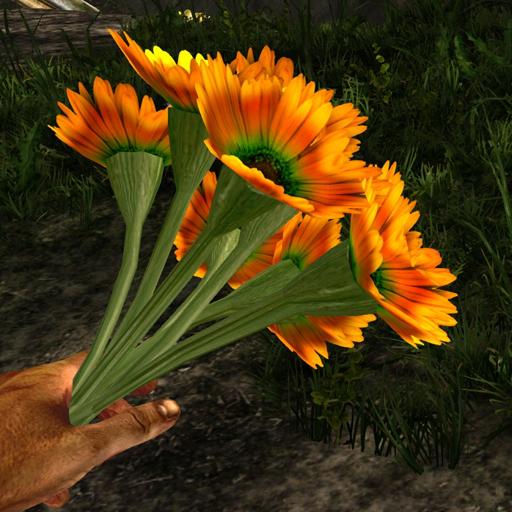 Orange prairie flower in hand