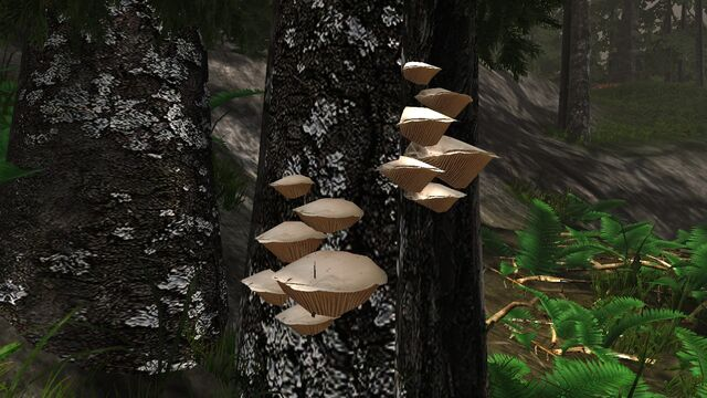 File:Wood gill fungus.jpg
