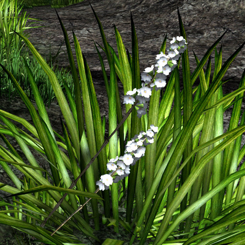 File:White-spiked prairie flower in wild.png