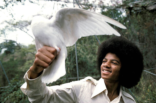 File:Michael jackson white bird 1975.jpg