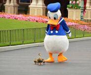 Donald-duck-1
