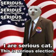 Lolcat-serious-election