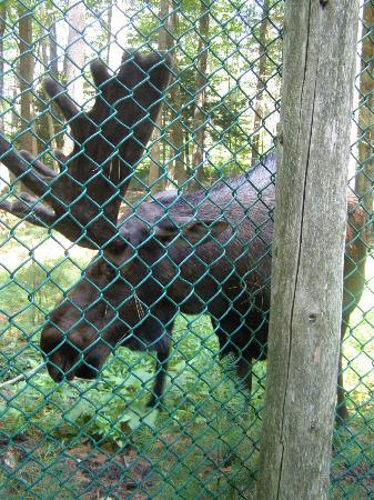 File:Maine-wildlife-park.jpg