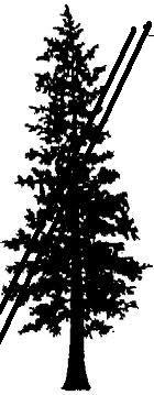 File:Cedar tree.jpg