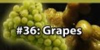 2x018 - Grapes