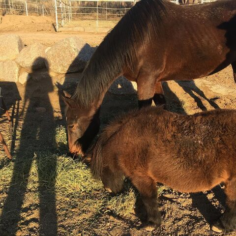 File:Parisa fitz-henley horse ranch.jpg