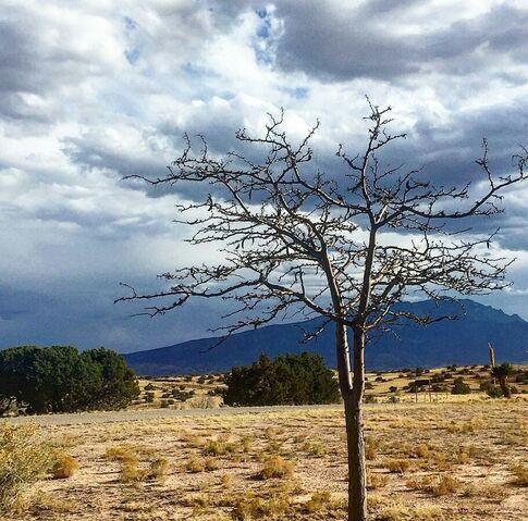 File:Desert tree.jpg