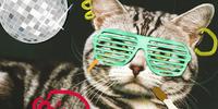 L0rdVega's Cat