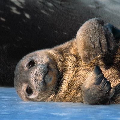 File:Antarctica-c-09.jpg