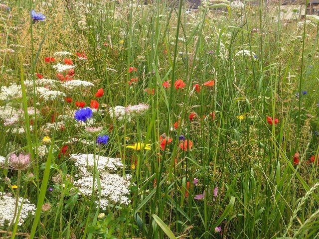 File:Halton Wildflower Meadow 2014.jpg