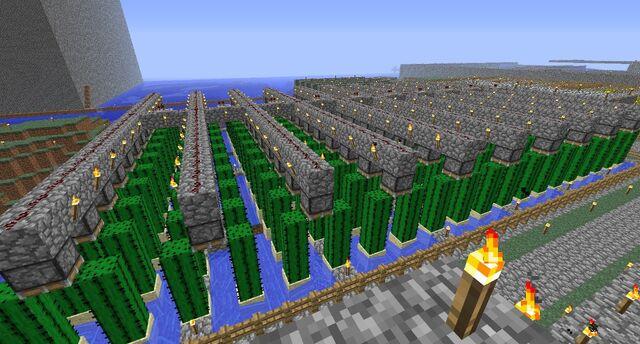 File:A cactus farm.jpg