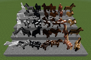 HorseBreeds