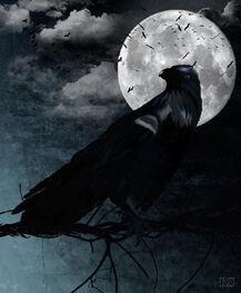 Raven-renata-s