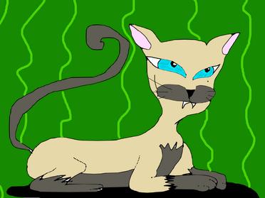 1° Gato siamês