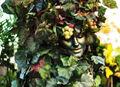 The Green Goddess.jpg