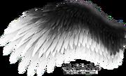 Romantic wing black white by thy darkest hour-d4u9ukj
