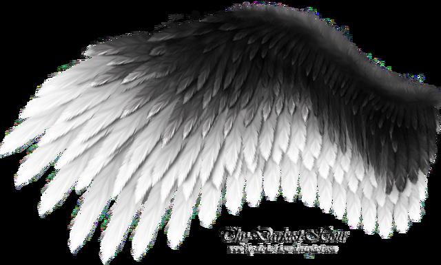 File:Romantic wing black white by thy darkest hour-d4u9ukj.png