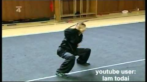 Hung Gar demo Lam Chun Fai, Brno, 2008, 洪拳-0