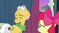 Grand Pear looks away from Apple Bloom S7E13.png