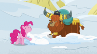 Pinkie Pie pretending to like snow beds S7E11