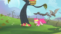 Pinkie Pie leaving the apples onto the ground for the bats to consume S4E07