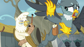 Elderly griffon angrily chases Gabby off S6E19.png