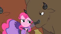 Buffalo staring at Pinkie S1E21