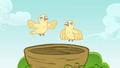 Chicks flying S4E04.png