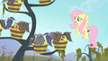 Fluttershy 'I really, really, really hate to do this to you' S4E07.png