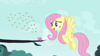 "Fluttershy ""back off my Breezie friend"" S4E16"