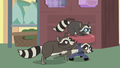 Family of raccoons playing with clinic chair S7E5.png
