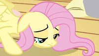 Fluttershy recovering S3E13