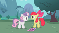 Apple Bloom questioning Sweetie Belle S02E05.png