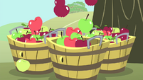 Apples falling into tubs S4E13