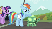 Rainbow Dash with Tank S2E07.png