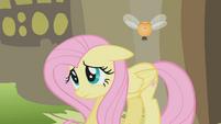 Fluttershy is sorry S1E10