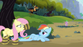Rainbow Dash not amused S3E9.png