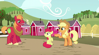 Applejack points Apple Bloom to Big Mac S5E17