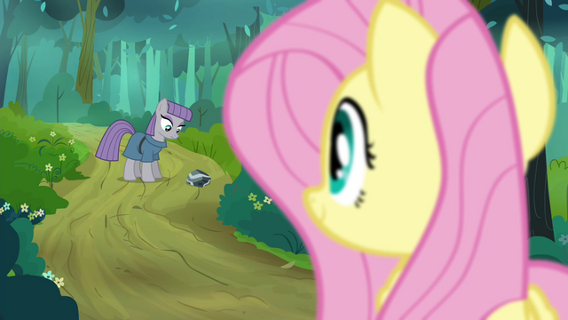 File:Fluttershy looking at Maud S4E18.png