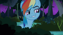 Rainbow Dash hiding S4E04