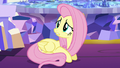 "Fluttershy ""we're all a little guilty"" S5E3.png"