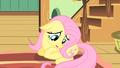"Fluttershy ""maybe I shouldn't go"" S01E22.png"