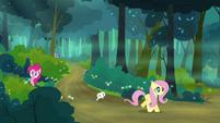 Fluttershy walking in the forest S4E18