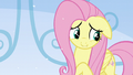 Fluttershy thinking about what she has to say S6E2.png