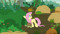"Fluttershy ""this fight is really affecting the animals"" S5E23"
