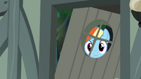 Rainbow Dash peeking through the window S4E04