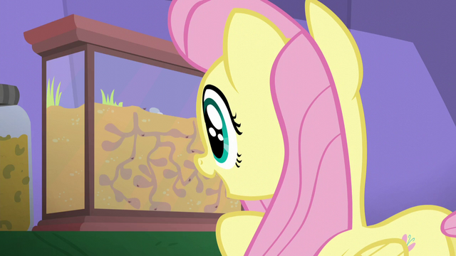 File:Fluttershy looking at an ant farm S5E19.png