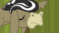 Cranky Doodle places skunk on his head S6E15